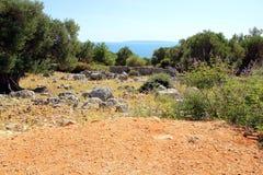 Vecchio giardino di olivo in Lun immagine stock libera da diritti