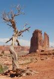Vecchio ginepro ed il deserto fotografia stock libera da diritti