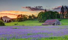 Vecchio granaio nella valle di Willamette Fotografia Stock Libera da Diritti