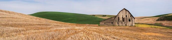 Vecchio granaio stagionato circondato dai giacimenti di grano Fotografia Stock Libera da Diritti