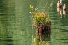 Vecchio lago del ceppo di albero in rosso fotografia stock