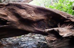Vecchio legname Fotografia Stock
