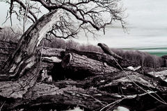 Vecchio, legname annodato Immagine Stock Libera da Diritti