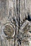 Vecchio legno Immagini Stock