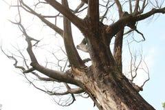 Vecchio legno asciutto Fotografia Stock Libera da Diritti