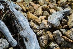 Vecchio legno con le rocce Fotografie Stock