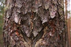 Vecchio legno con le tracce di tagli fatti dalla gente Fotografia Stock