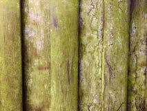Vecchio legno esposto all'aria Immagini Stock Libere da Diritti