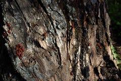 Vecchio legno esposto all'aria fotografia stock libera da diritti