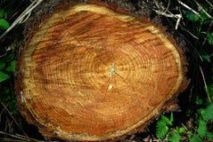 Vecchio legno esposto all'aria fotografia stock