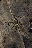 Vecchio legno morto Fotografia Stock Libera da Diritti