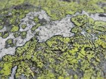 Vecchio lichene sulla pietra grigia Immagine Stock