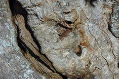 Vecchio marrone Immagini Stock