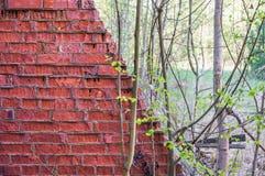 Vecchio mattone di decomposizione con gli alberi ed i cespugli Immagine Stock Libera da Diritti