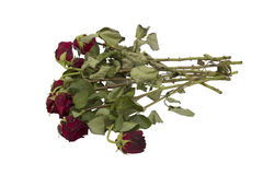 Vecchio mazzo della rosa rossa isolato su bianco Fotografia Stock