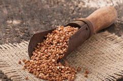 Vecchio mestolo di misurazione con grano saraceno Immagine Stock