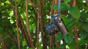 Vecchio metraggio del hd del fondo dell'albero della macchina fotografica nessuno stock footage