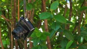 Vecchio metraggio del hd del fondo dell'albero della macchina fotografica nessuno archivi video