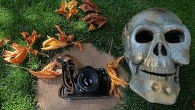 Vecchio metraggio del hd del fondo dell'erba del troncone del cranio della macchina fotografica nessuno video d archivio