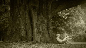 Vecchio metraggio di effetto del film: un ragazzo si siede sotto l'albero enorme e legge un libro video d archivio