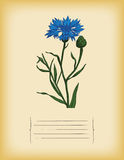 Vecchio modello di carta con fiordaliso blu. Vettore Immagine Stock Libera da Diritti