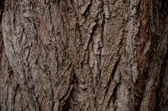 Vecchio modello di legno del fondo di struttura dell'albero Immagine Stock