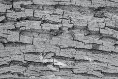 Vecchio modello strutturato di legno del tronco di albero Immagine Stock