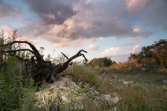 Vecchio mucchio della miniera della lumaca Immagine Stock Libera da Diritti