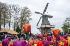 Vecchio mulino a vento con molta gente in giardino famoso in Keukenhof Immagine Stock