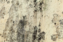 Vecchio muro di cemento grungy giallo, fondo Fotografie Stock
