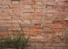 Vecchio muro di mattoni Immagine Stock