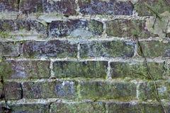 Vecchio muro di mattoni con la muffa ed i licheni Fotografie Stock Libere da Diritti