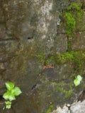 Vecchio muro di mattoni con muschio Immagini Stock Libere da Diritti