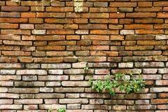 Vecchio muro di mattoni e nuova erba Fotografie Stock Libere da Diritti