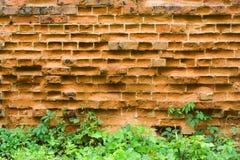 Vecchio muro di mattoni ed uva selvaggia Fotografia Stock Libera da Diritti