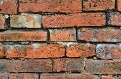 Vecchio muro di mattoni di vecchio lerciume del muro di mattoni come fondo Fotografia Stock