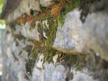 Vecchio muro di mattoni muscoso di pietra immagine stock