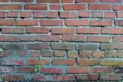 Vecchio muro di mattoni rosso Fotografia Stock Libera da Diritti