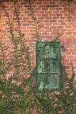 Vecchio muro di mattoni di struttura, modello dettagliato coperto in edera fotografie stock libere da diritti