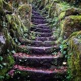 Vecchio muschio di pietra della foresta delle scale immagini stock libere da diritti