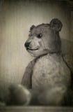 Vecchio orso Immagine Stock