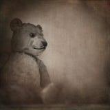 Vecchio orso Fotografia Stock