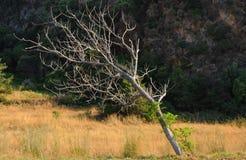 Vecchio paesaggio dell'albero fotografie stock