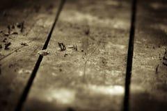 Vecchio pavimento di legno Fotografia Stock