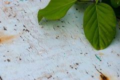 Vecchio pavimento di legno coperto di colore Immagini Stock