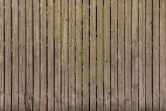 Vecchio pavimento di legno d'annata con erba nelle crepe dei bordi immagine stock