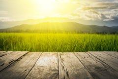 Vecchio pavimento di legno marrone accanto al giacimento verde del riso nel tramonto del fascio e di sera Fotografia Stock