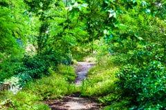 Vecchio percorso abbandonato che è mangiato dalla natura-natura contro la città Fotografia Stock