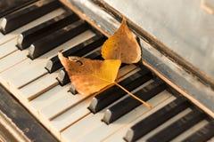 Vecchio piano, foglie di autunno sulle chiavi, immagini stock