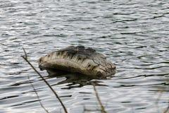 Vecchio pneumatico in acqua Immagini Stock